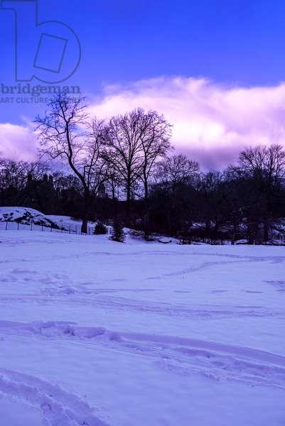 Purple Central Park Winter Nº2