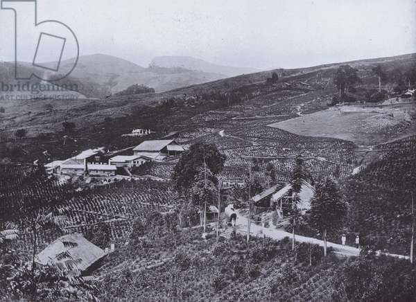 General View of Tea Estate and Factory (b/w photo)