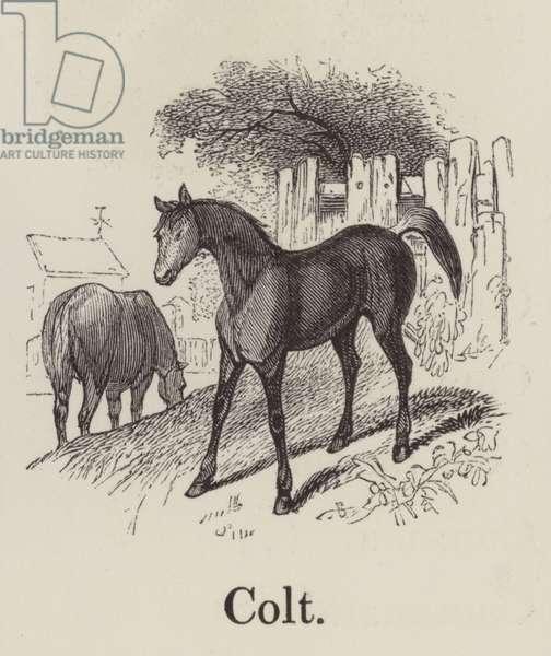 Colt (engraving)