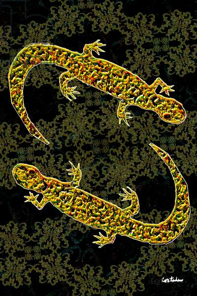 (Florida is...) Salamanders