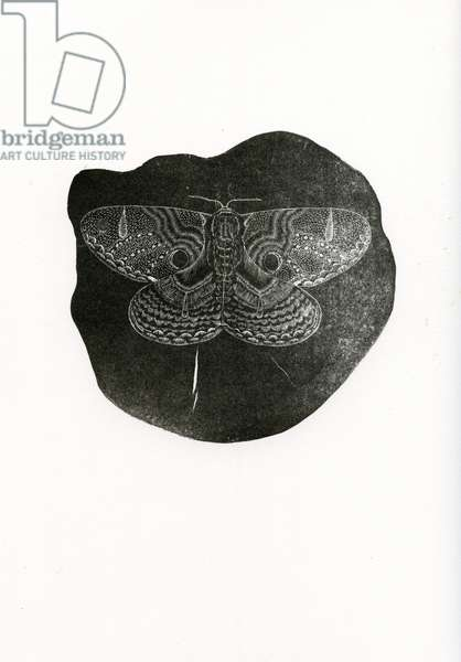 Night Butterfly, 2016 (wood engraving on paper)