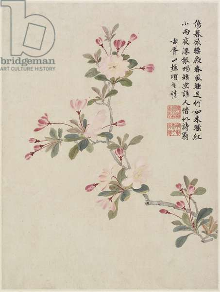 Crab-apple Blossom from a Flower Album of Ten Leaves, 1656 (ink & colour on paper)