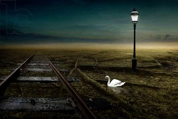 Railway, 2013 (photography)