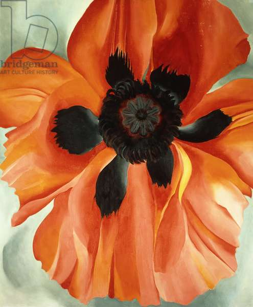 Red Poppy, No. VI, 1928 (oil on canvas)