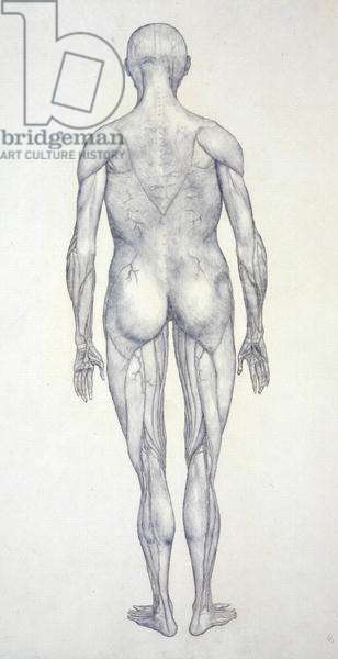 Study of the Human Figure, Posterior View, from 'A Comparative Anatomical Exposition of the Structure of the Human Body with that of a Tiger and a Common Fowl', c.1795-1806 (graphite on cartridge paper)