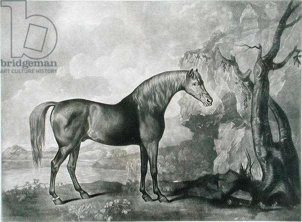 Brown Horse Mask, after George Stubbs, 1773 (mezzotint)