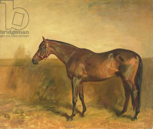 Portrait of Lord Derby's Stallion, 'Fairway', painted at Newmarket, 1936 (oil on canvas)