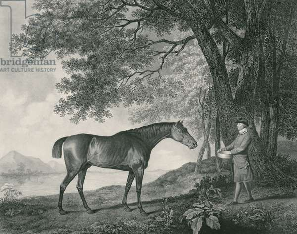 Sharke, engraved by George Townley Stubbs (1756-1815) pub. 1794 (etching)