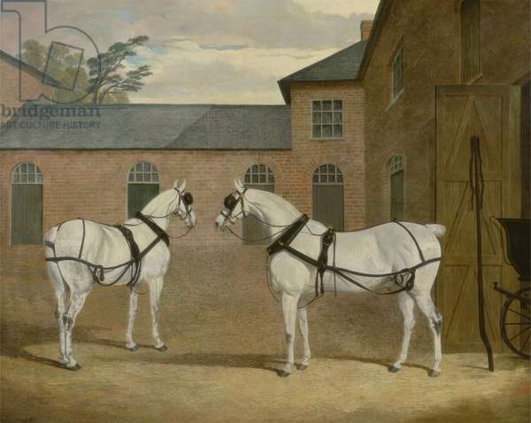 Mr. Sowerby's Grey Carriage Horses in his Coachyard at Putteridge Bury, Hertfordshire, 1836 (oil on canvas)
