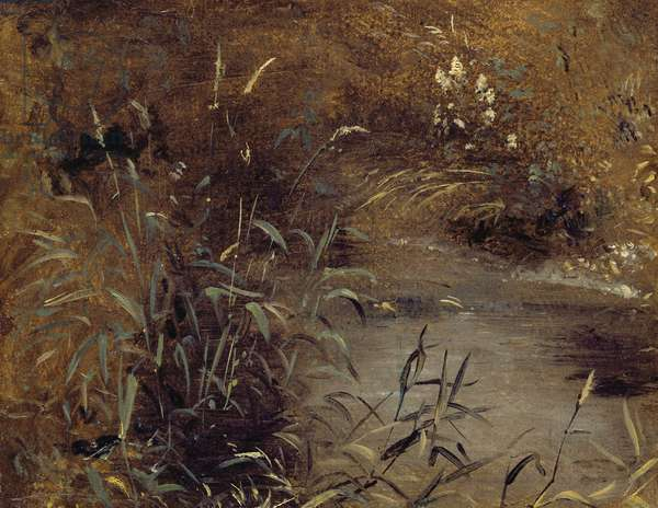 Rushes by a Pool, c.1821 (oil on paper on board)