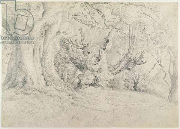 Ancient Trees, Lullingstone Park, 1828 (graphite on paper)