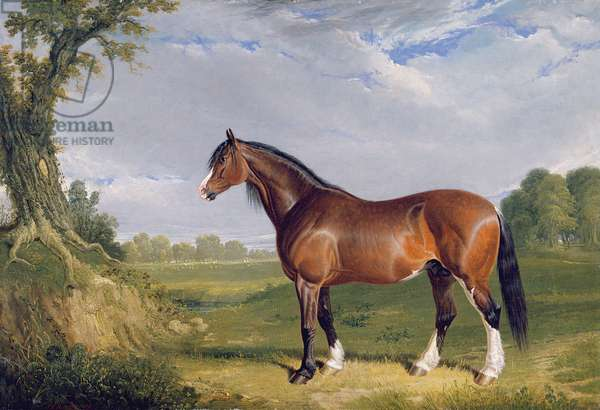 A Clydesdale Stallion, 1820 (oil on canvas)
