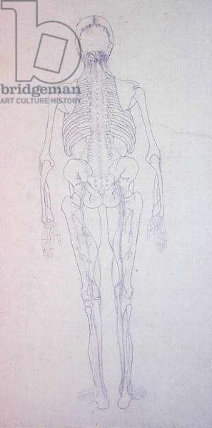 Study of the Human Figure, Posterior View, from 'A Comparative Anatomical Exposition of the Structure of the Human Body with that of a Tiger and a Common Fowl', c.1795-1806 (graphite on paper)