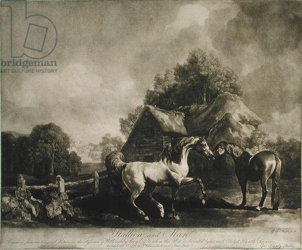Stallion and Mare, engraved by George Townley Stubbs (1756-1815) 1776 (mezzotint)