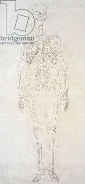 Study of the Human Figure, Anterior View, from 'A Comparative Anatomical Exposition of the Structure of the Human Body with that of a Tiger and a Common Fowl', c.1795-1806 (graphite & ink on paper)