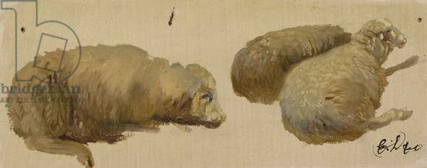 Three Sheep at Rest (oil on paper)