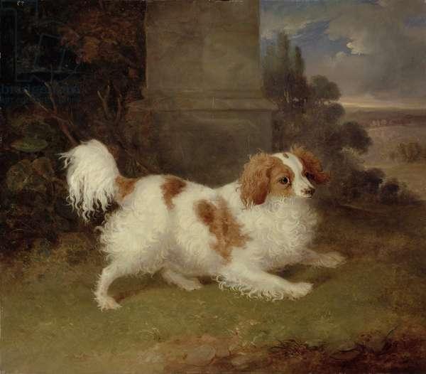 A Blenheim Spaniel, c.1820-30 (oil on canvas)