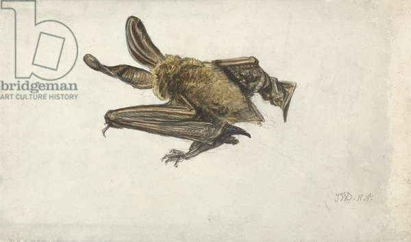 A Bat (pencil & w/c on paper)