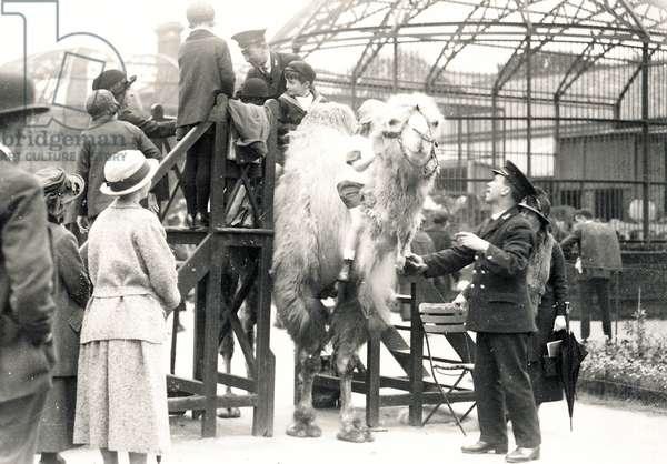 Camel riding with keeper H. Warwick (b/w photo)