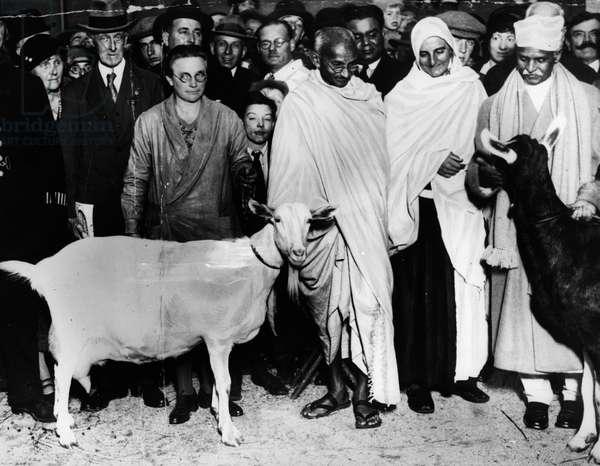 12/05/1931 Mahatma Gandhi (Mohandas Karamchand Gandhi, 1869-1948) with his goat on an official tour, England