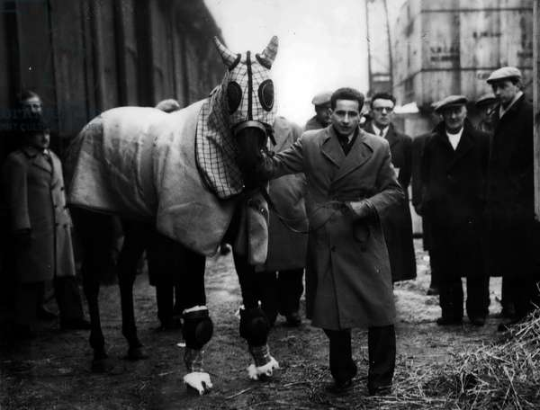 Jan. 01, 1955 - LANDAU GOLD ABOARD - BOUNDFOR AUSTRALIA. The queen's racehorse, LANDAU, which was sold to Australian, Mr. E.A. Underwood for 21,000 - this morning went aboard the Port Fremantle, at King George V Dock, London, KEYSTONE PHOTO SHOWS: - LANDAU seen with apprentice CLIFFORD LINES, 19 - who will ccompany the hords to Australia - seen at King George V Dock, London this morning